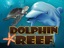 Dolphin Reef играть онлайн